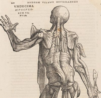 500 years Vesalius exhibition