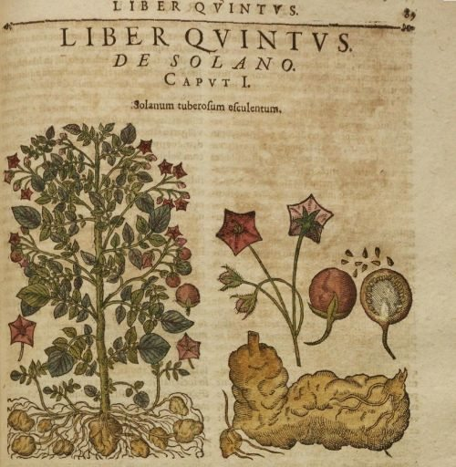 Tabacco is healthy: valuable herbal books from three Maastricht collections