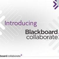 bb_collab_interface