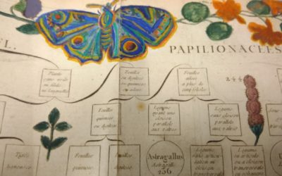 Opening up old books: treasure hunting in UM's botanical archives